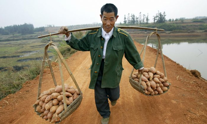A farmer carries baskets of yams balanced on a pole across his back, on 30 October, 2004. (FREDERIC BROWN/AFP/Getty Images)