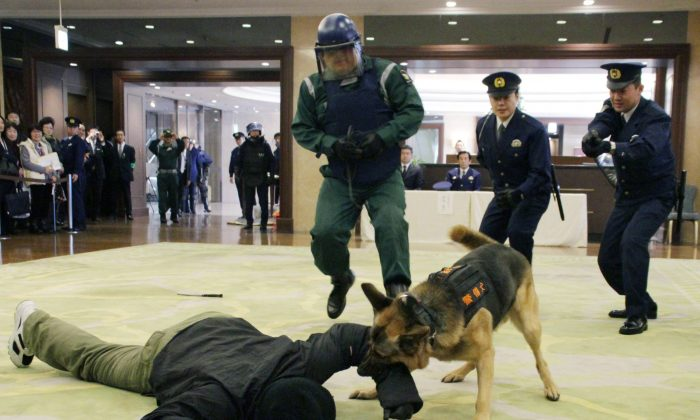 """Police officers take position as a police dog bites an arm of an armed """"terrorist"""" during an anti-terror drill at a hotel in Tokyo on Nov. 24, 2015. (Taisuke Yamazaki/Kyodo News via AP)"""