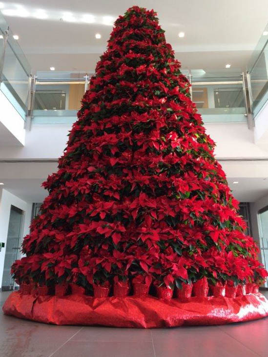 A tree of poinsettias from Wessels' Farms in Mount Hope and arranged by Greenery Florist Plus in Monroe at the headquarters of Mediacom in Chester on Dec. 5, 2015. (David Umberto)