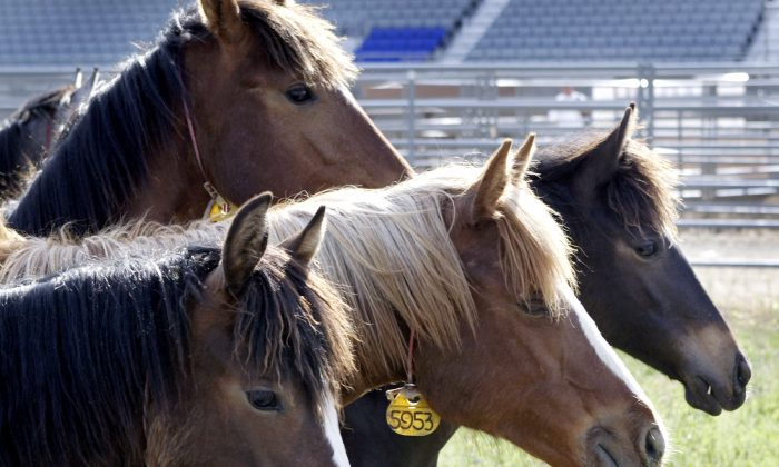 A stock photo of horses. (Jeff T. Green/Getty Images)