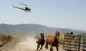 US Government May Kill 45,000 Wild Horses