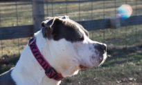 Texas Animal Shelter Fire Kills Resident Animals; 'Puppy Room Hit the Worst'