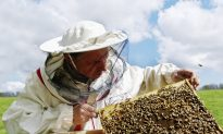 Give Bees a Chance: The Ancient Art of Beekeeping Could Save Our Honey (And Us Too)