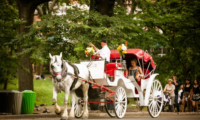 People relax and recreate on a hot Summer day, in Central Park, New York City, on July 3, 2014. (Edward Dai/Epoch Times)A horse-drawn carriage driver takes passengers for a ride around Central Park, Monday, April 28, 2014, in New York. (AP Photo/Kathy Willens)