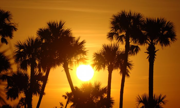 Palm trees and a setting sun on the horizon at the end of  the Golden Eagle Pro Am at the 2006 Honda Classic at the Country Club at Mirasol in Palm Beach Gardens, Florida on Wednesday, March 8, 2006. (Al Messerschmidt/PGA)