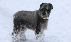 Maryland Pet Owners Could Face a $500 Fine for Leaving Animals Outside During Cold Weather