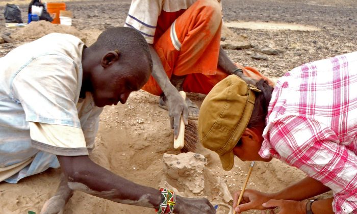 In this August 2012 photo provided by Marta Mirazon Lahr, researcher Frances Rivera, right, Michael Emsugut, left, and Tot Ekulukum excavate a human skeleton at the site of Nataruk, West Turkana, Kenya.  (Marta Mirazon Lahr via AP)