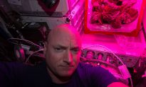 First Flower Blooms in Space, Key to Living on Mars