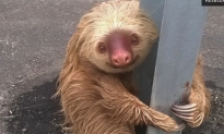 The Most Adorable Sloth Ever Stranded on Highway Goes Viral (Video)