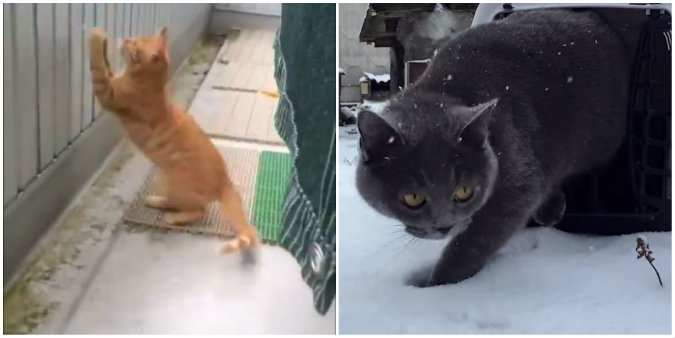 Cats enjoy their first adventure in the snow. (Screen shot/Youtube & Miaopai)