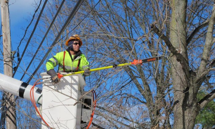 In this Jan. 27, 2016 photo, Rafael Panavala, an employee with Asplundh Tree Service, prunes branches off a tree in Plandome Heights, N.Y. The electric utility PSEG Long Island hires contractors like Asplundh to perform tree trimming annually on trees in an effort to prevent power outages during snowstorms and other severe weather. (AP Photo/Frank Eltman)