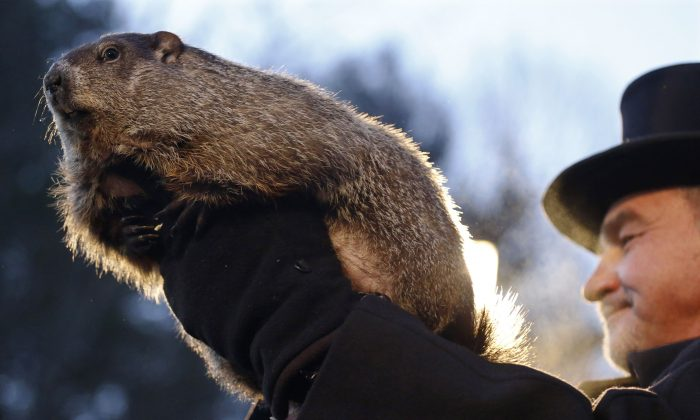 "Groundhog Club co-handler John Griffiths holds Punxsutawney Phil during the annual celebration of Groundhog Day on Gobbler's Knob in Punxsutawney, Pa., Tuesday, Feb. 2, 2016. The handlers say the furry rodent has failed to see his shadow, meaning he's ""predicted"" an early spring. (AP Photo/Keith Srakocic)"