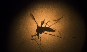 First Zika Virus-Related Death in the US Reported