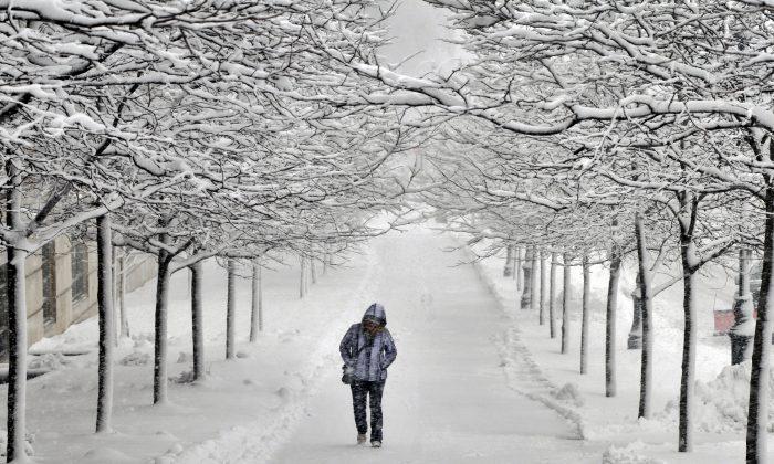 A pedestrian walks between rows of snow-covered trees on Martin Luther King Jr. Blvd. in Worcester, Mass. during a snowstorm on Feb. 5, 2016. (Paul Kapteyn/Worcester Telegram & Gazette via AP)