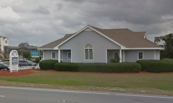 Animal Hospital of Nags Head (Google Street View)