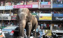 Wild Elephant Goes on Rampage in Indian Town
