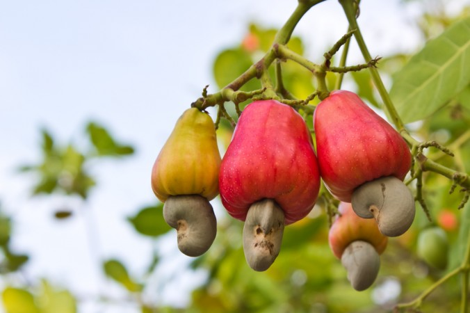 11 Foods That Grow in Totally Unexpected Ways: Cashews, Baby Corn, Cinnamon