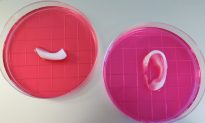 Amazing 3D Printer Can Create Ears, Jawbone, and Muscle