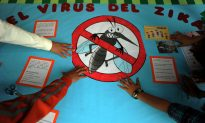 UN: Genetically Modified Mosquito Needed to Fight the Zika Virus