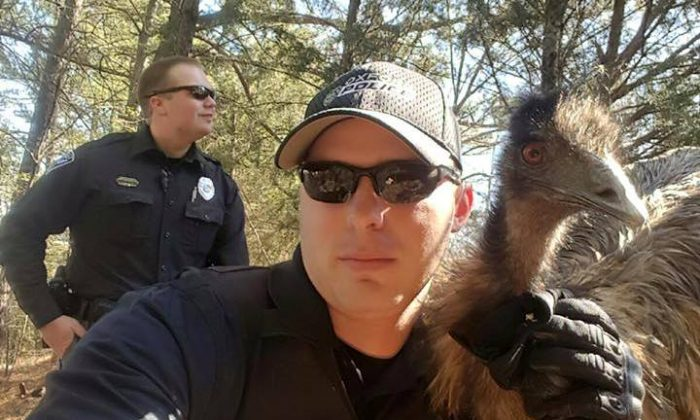 Oxford Police Officer Cody Pruitt with captured emu on Feb. 19, 2016. (Oxford Police Department)