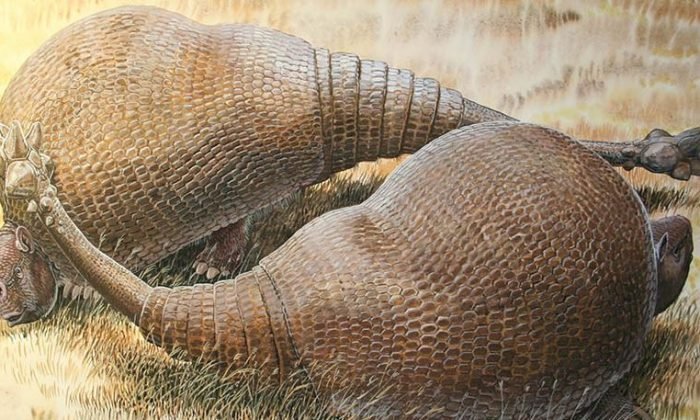 An illustration of ancient Glyptodonts. (Peter Schouten)