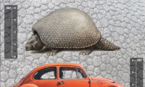Ancient Armadillos as Big as VW Beetle Once Roamed the Earth (Video)