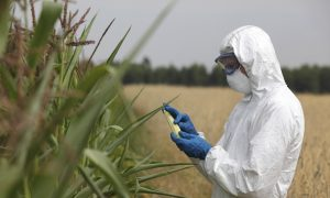 FDA to Monitor Glyphosate Levels in Food Supply