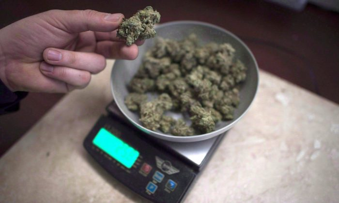 Marijuana is weighed at a medical marijuana dispensary in Vancouver, Feb. 5, 2015. (The Canadian Press/Jonathan Hayward)