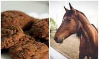 Horse and Dog Die After Eating Poisoned Cookie