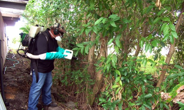 In this Nov. 3, 2015 photo, Norberto Dumo, vector control inspector for the Hawaii Department of Health, sprays aqua reslin, a pesticide, in Hilo on the Big Island of Hawaii. (Dale Nagata/Hawaii Department of Health via AP).