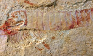 520-Million-Year-Old Fossil With Intact Nervous System Found In China (Video)