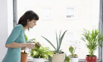 Seven Simple Ways You Can Reduce Air Pollution in Your Home