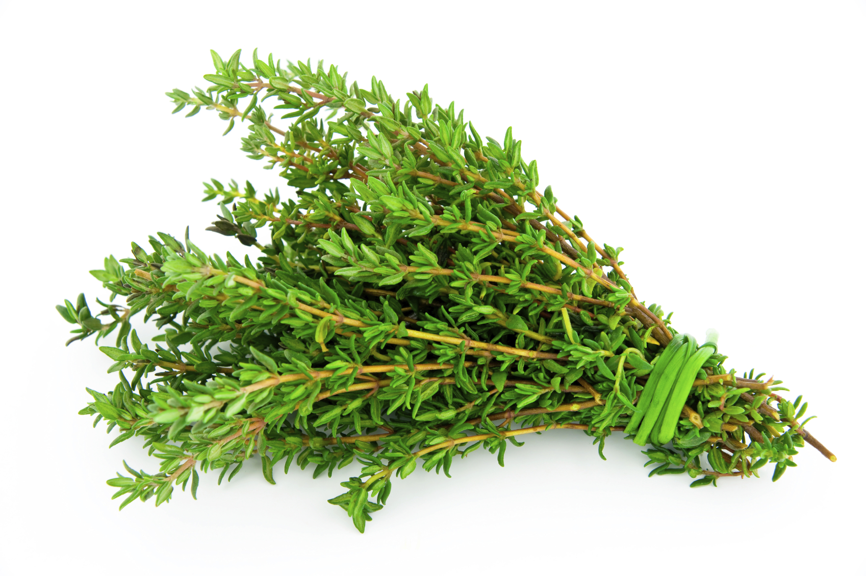 Thyme: Herb for Courage, Coughs, Purification, Pain Relief