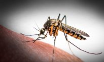 Study Uncovers Likely Link Between Zika and Microcephaly