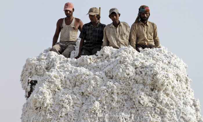 Indian laborers unload cotton from a truck at a cotton mill near Kadi, about 34 miles from Ahmadabad, India, on April 30, 2012. U.S. seed giant Monsanto has threatened to pull its genetically modified crop technology from India if the government goes ahead with its plan to cut the company's royalty fees. Over the last two decades, millions of small farmers have adopted genetically modified cotton seeds, making India one of the world's biggest producers of cotton. (AP Photo/Ajit Solanki)