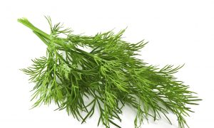 Dill Soothes the Stomach, Mind, and Menstrual Issues