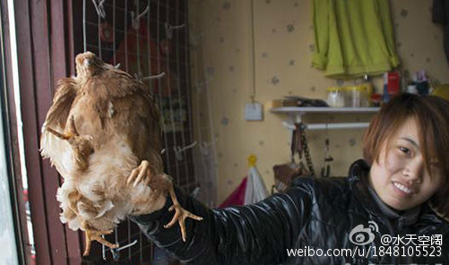 The farm owner and the chicken. (Sina Weibo)