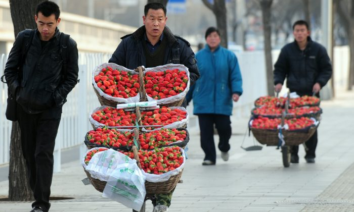 Farmers sell their strawberries from carts pushed along a Beijing street on Feb. 2, 2010. (Frederic J. Brown/AFP/Getty Images)