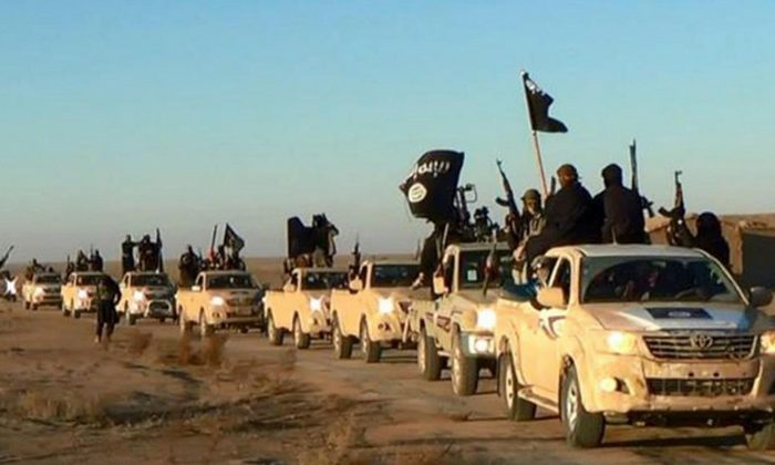 In this undated file photo released online in the summer of 2014 on a militant social media account, which has been verified and is consistent with other AP reporting, ISISI militants hold up their weapons and wave its flags on their vehicles in a convoy on a road leading to Iraq, in Raqqa, Syria. (Militant photo via AP)