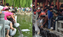 Foxes and Carp Feature in Folk Ritual Threatening China's Ecosystem
