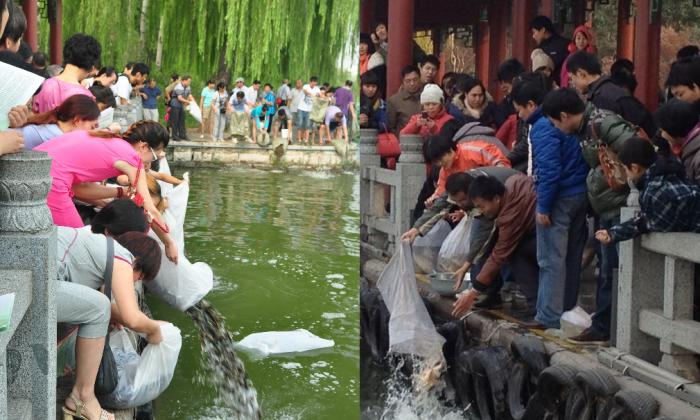 Chinese residents release captive fish into Daming Lake. (Sina Weibo)