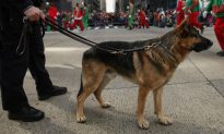 K-9 Dog Jake Dies After Sniffing Powdery Substance at Alabama Prison