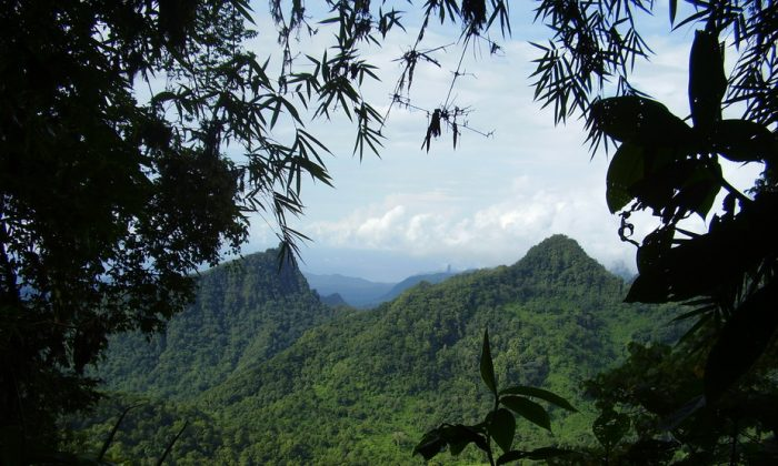 The forests of Sao Tome and Principe are being lost at an alarming rate. (Ricardo Lima)