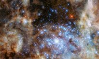 Hubble Spots Cluster of Monster Stars