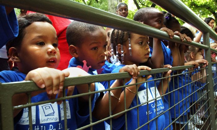 Children from a Manhattan child-care center get a look at two Vietnamese pot-bellied pigs that were introduced at the Central Park Children's Zoo. (Stan Honda/AFP/Getty Images)
