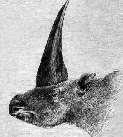 First published restoration of Elasmotherium sibiricum, by Rashevsky under supervision of A.F. Brant. (Public Domain)