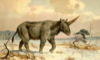 Researchers Find Siberian Unicorn Fossil Fragments in Kazakstan, Say Creature Lived Much Longer Than Thought