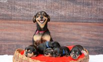 The Best Newborn Shoot Ever Stars Puppies