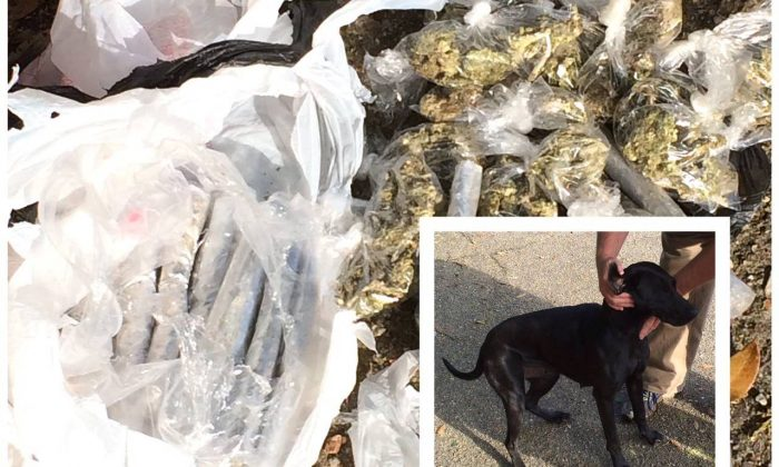 On March 26, 2016 Jones County Deputies were dispatched to the 200th block of Will Hayes Road. The owner of a dog, family pet, at brought to the home a large bag with a substance that was believed to be marijuana. (Jones County Sheriff's Department)