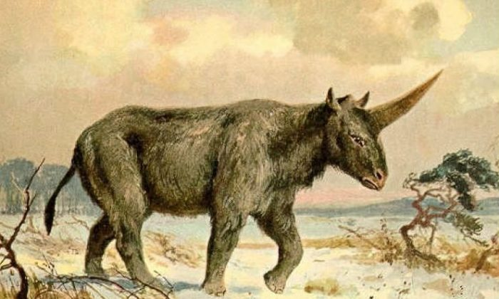 """Painting of the Elasmotherium sibiricum or """"Siberian unicorn"""" by Heinrich Harder. (Public Domain)"""